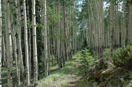 aspen-grove-1-of-1.jpg