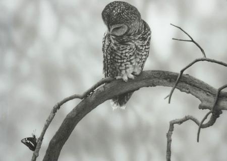 utterback-owl-5-of-1.jpg