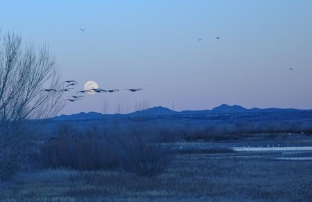 cranes-and-moon-1-of-1.jpg