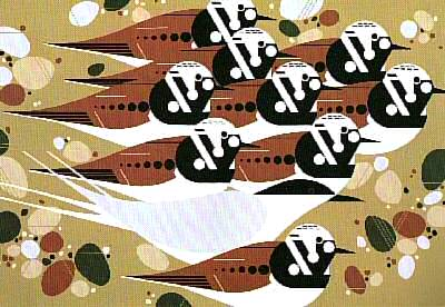 Terns and Turnstones