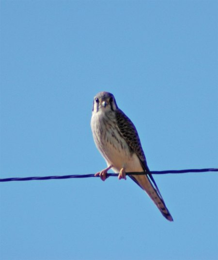 kestrel-small.jpg