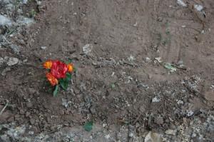 Baby roadrunner Grave