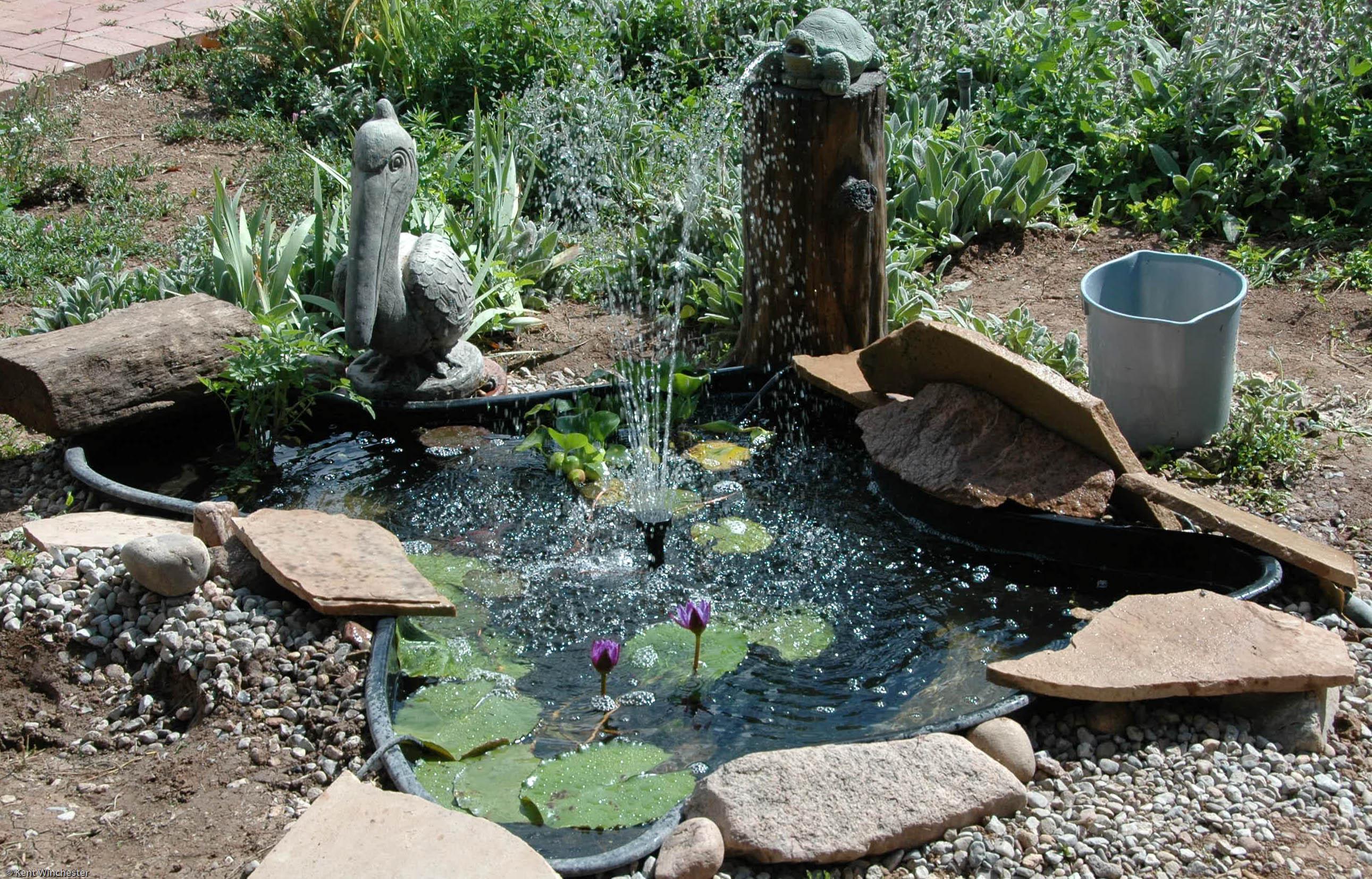 Turtle Ponds For Backyard