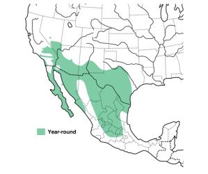 Cactus Wren range