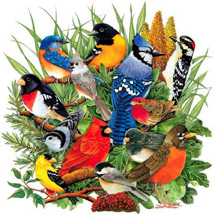 Northeastern Birds