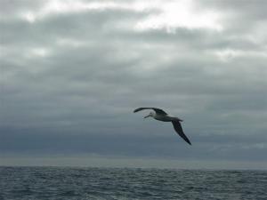 wandering-flying1