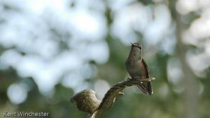 hummingbirds-at-4ur-2