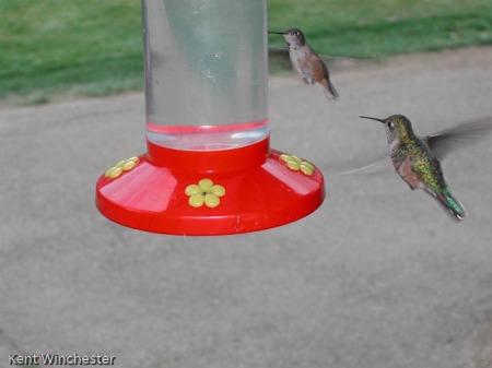 hummingbirds-at-4ur