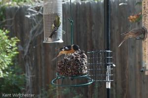bird symphony (1 of 4)