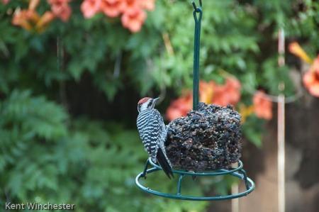 bird symphony (3 of 4)