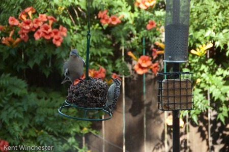 bird symphony (4 of 4)