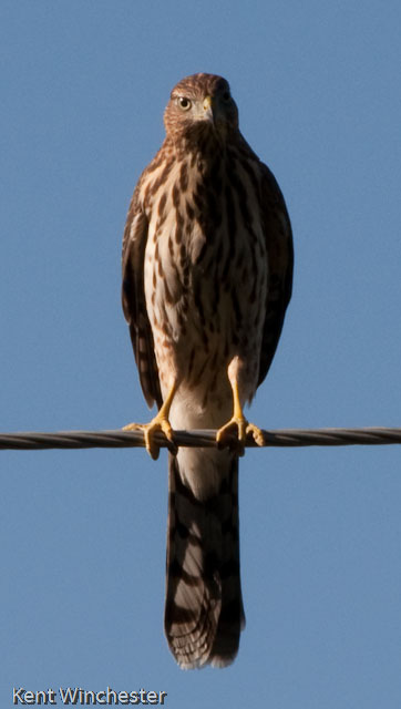Pretty Neat Bird