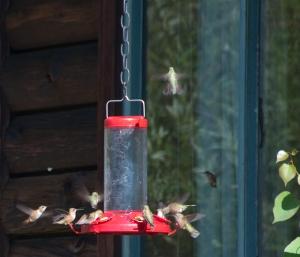 Hummingbird-4