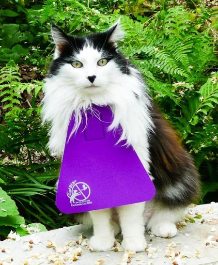 cat bib-1