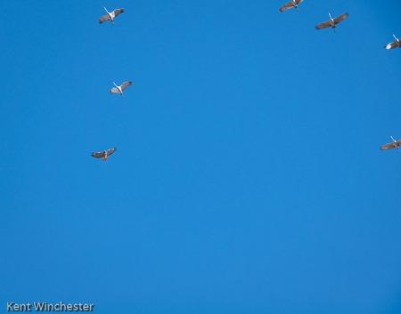 Crane and Hawk-1