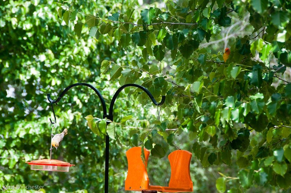 Haga su patio trasero más atractivo para las aves en invierno
