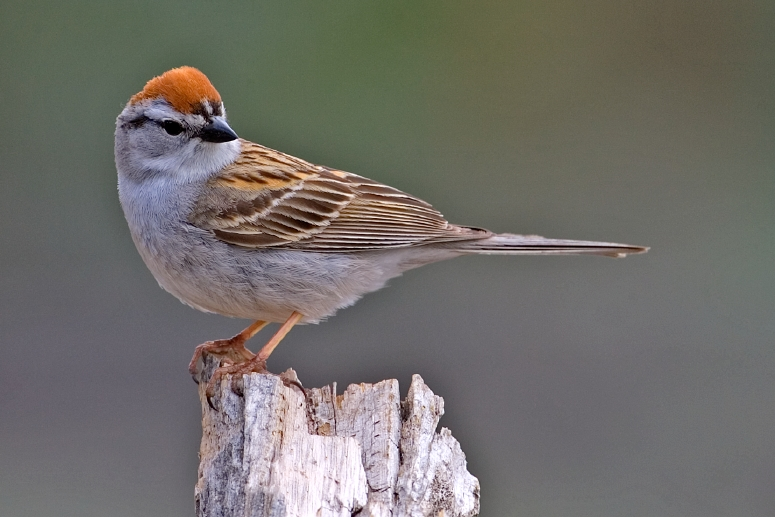 Why Bird Brain Shouldnt Be Considered >> Bird Brains Fat Finch Backyard Birds Birding Blogging